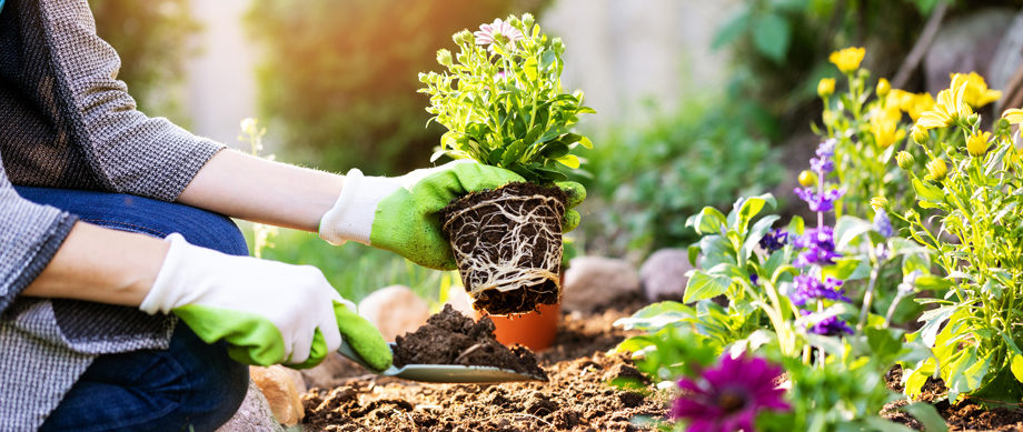 5 Ways to Keep Your Garden Healthy