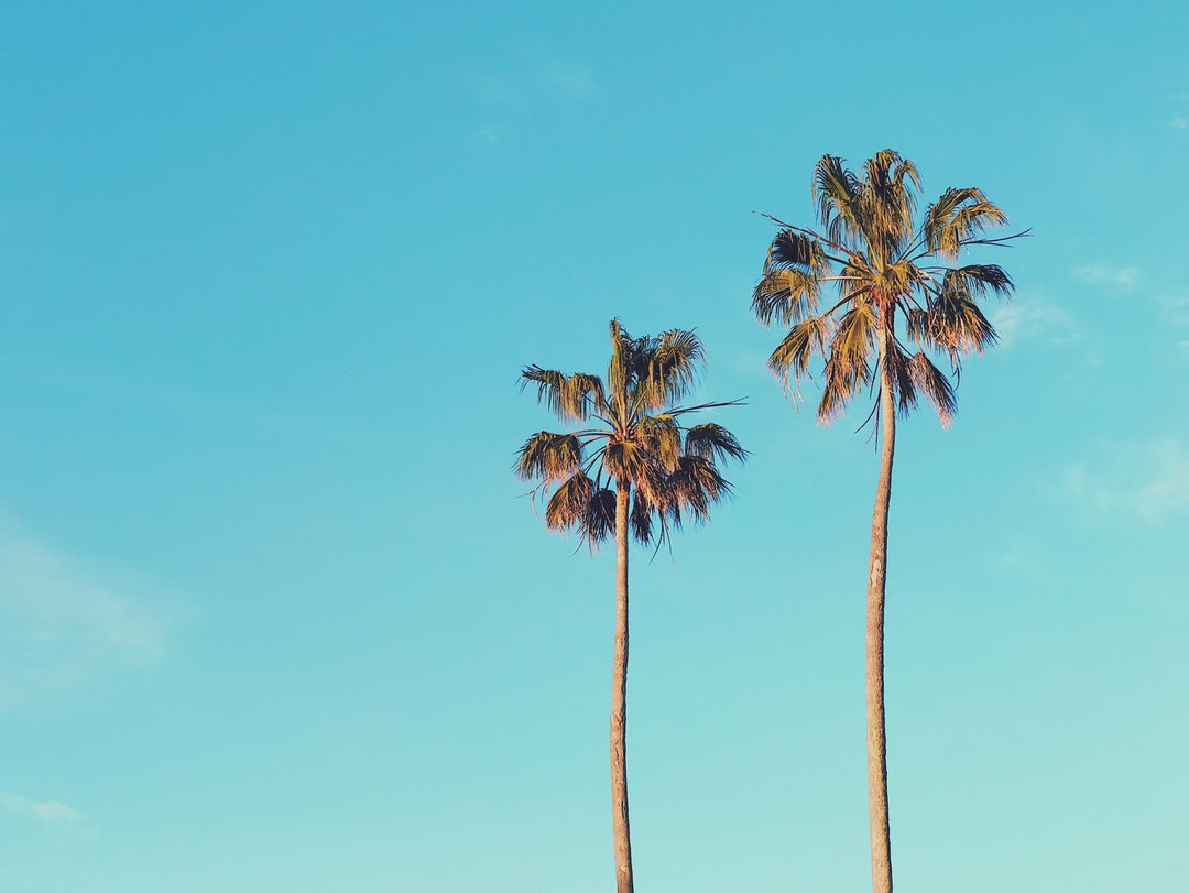 5 Cool Facts You Didn't Know About the Palm Tree