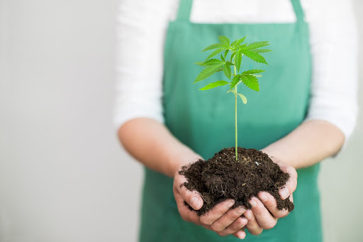 6 Hacks  to Make Your Very Own Cannabis Potting Soil Mix
