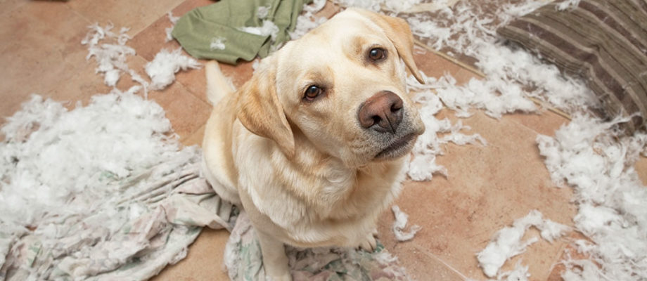 All Creatures Veterinary Center – Helping Your Pooch With Separation Anxiety