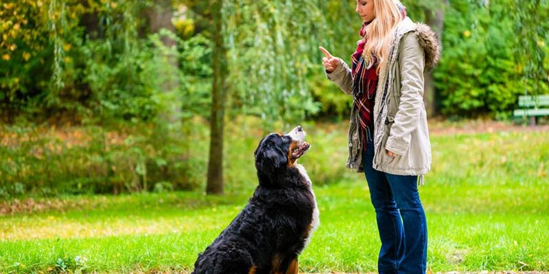 What You Should Know About Brain Training for Dogs