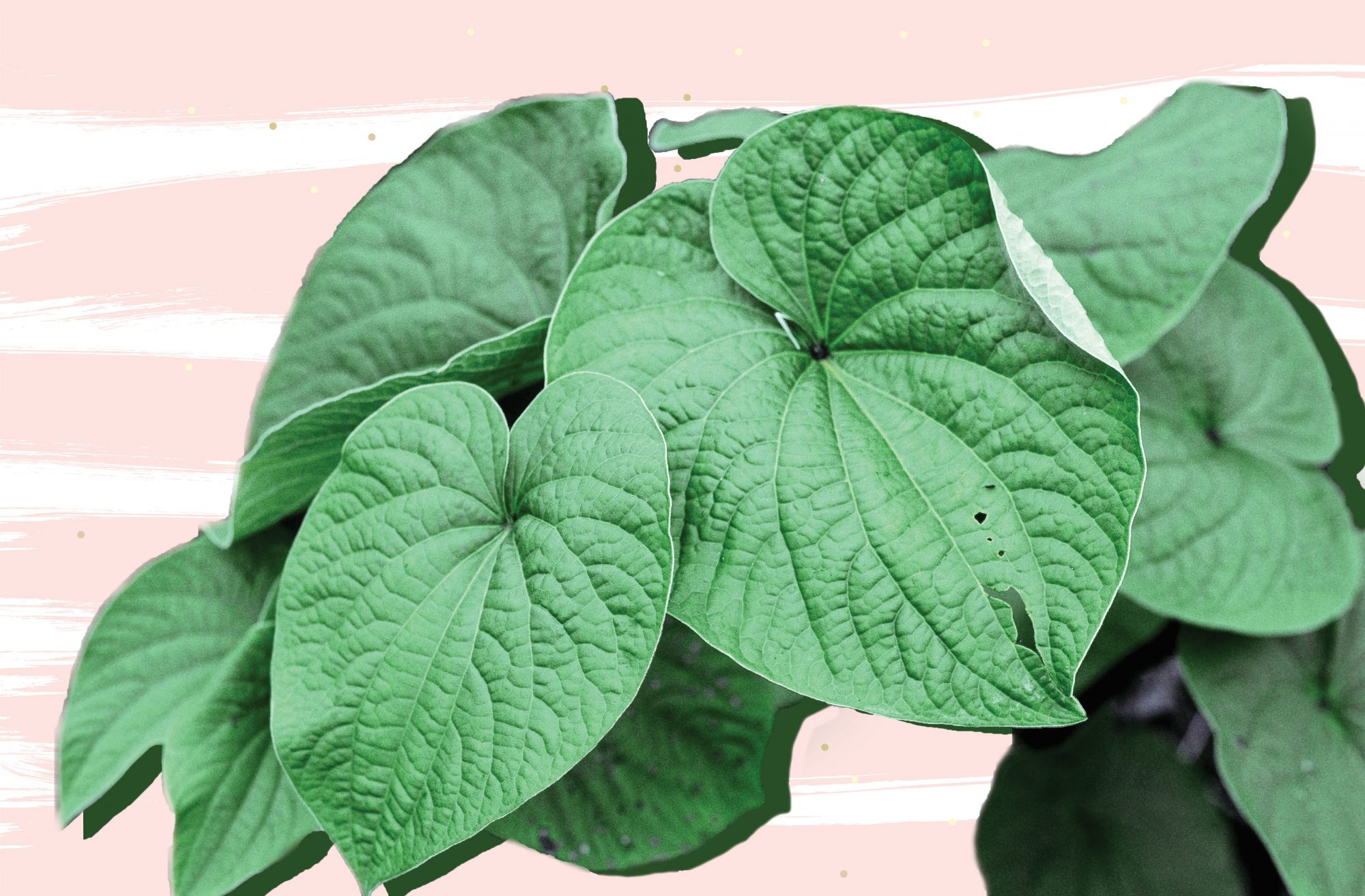 What Is Kava, Is Kava Safe, and Can Kava Help with Anxiety? | Shape