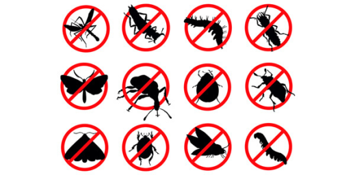 Your Guide to Pests and How to Control Them