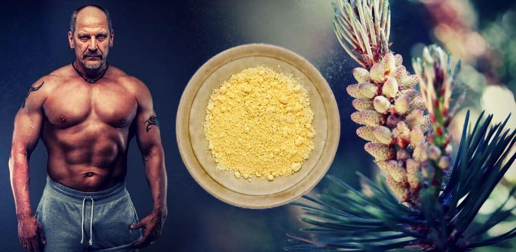 Pine Pollen Tincture: The Best Natural TRT Alternative