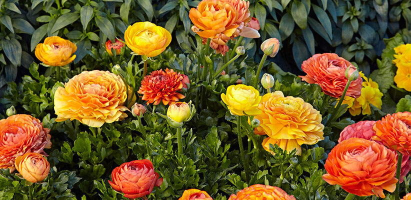 Five Ways to Continue Enjoying Your Garden in Winter