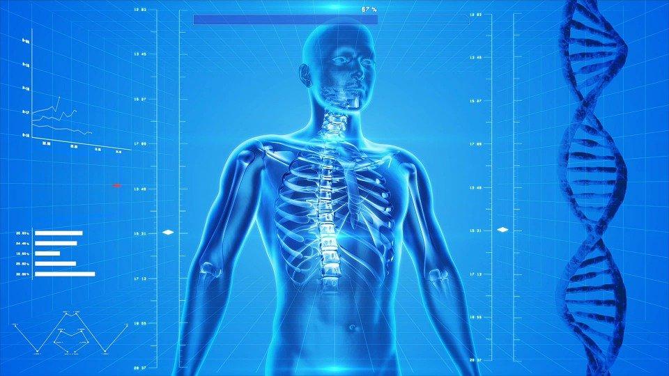 Human Skeleton, Human Body, Anatomy, X-Ray, Human Bones